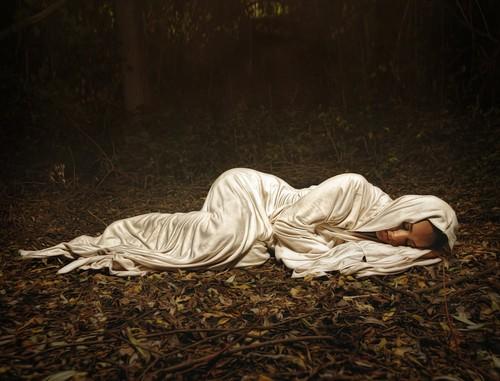 Seeking julia - The hideout in the woods an artists dream ...